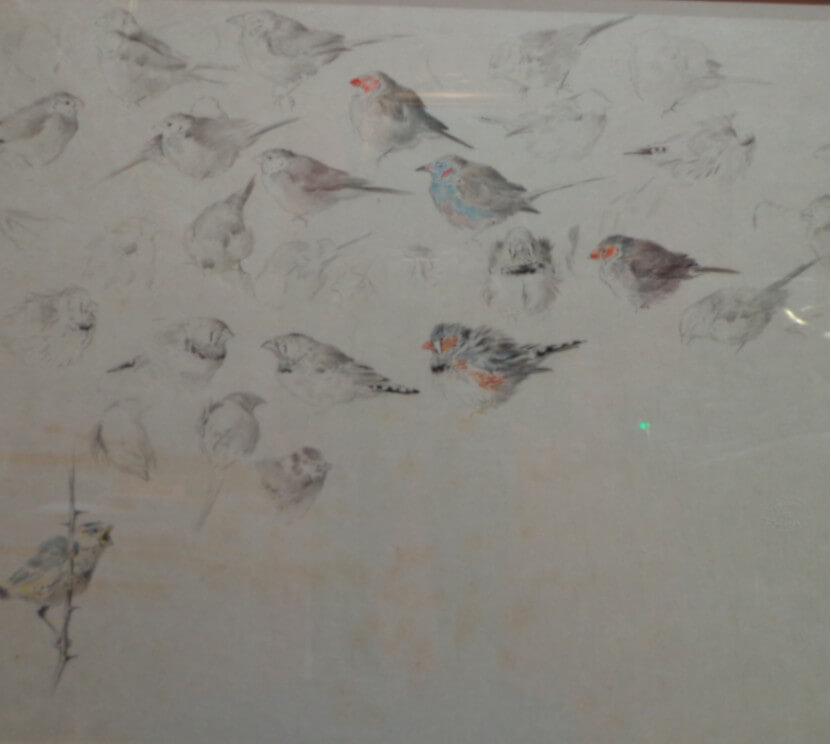 Xavier de Poret ( 1894-1975) | Etude de mesanges. Dessin. Crayon sur papier japon. Dim : 50cm x 65,5cm (vendu)